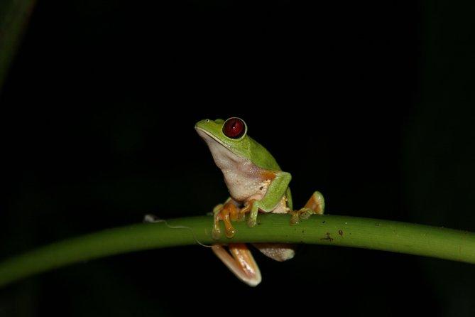 Recorrido nocturno a pie por Manuel Antonio, Quepos, COSTA RICA
