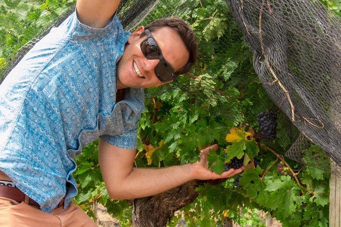 Wine, Food & Beer Tour (departing Dunsborough, Busselton, Yallingup), Busselton, AUSTRALIA