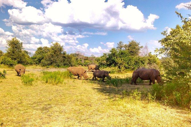 Game drive in the Mosi Oa Tunya National Park - Livingstone, Livingstone, ZIMBABUE