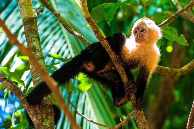 Excursión al Parque nacional Manuel Antonio, ,