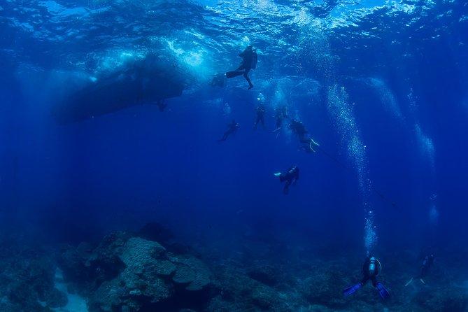 FUN DIVE(certified diver)-Boat dive, Kaohsiung, TAIWAN