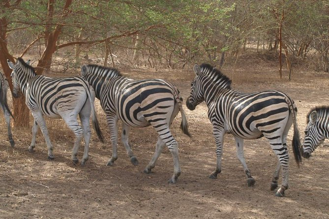 Medio día a Laguna Somone y Safari  al Parque Bandia desde Dakar, Dakar, SENEGAL