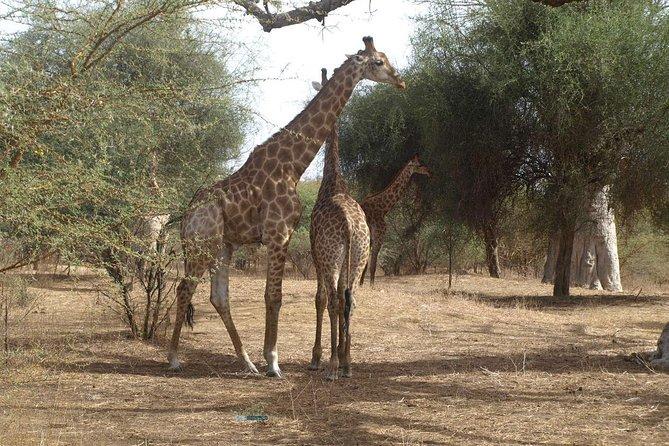 Meio dia para Laguna Somone e Safari no Parque Bandia desde Dakar, Dakar, SENEGAL