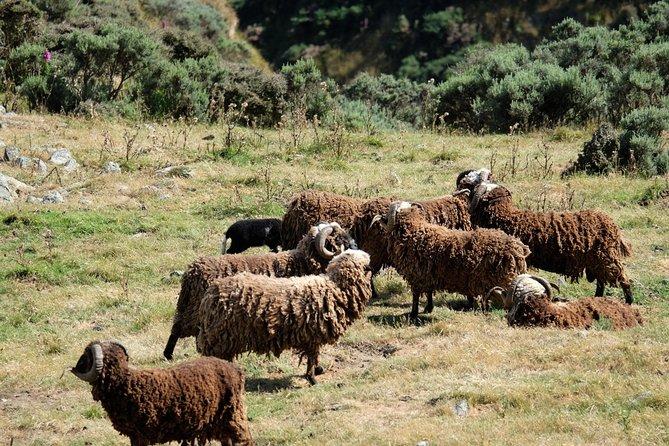 Kiwi Coastal Tours showing you Wellington and its spectacular scenery, Wellington, NUEVA ZELANDIA