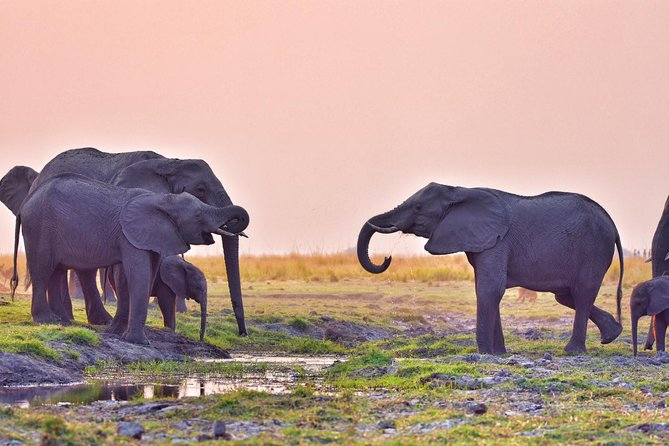 A sunset cruise starting at 3pm ending 6pm, more relaxed, viewing elephants swimming across chobe river onto sedudu island, hippos, crocodiles, birds, puku, red lechwe. A fully guided trip