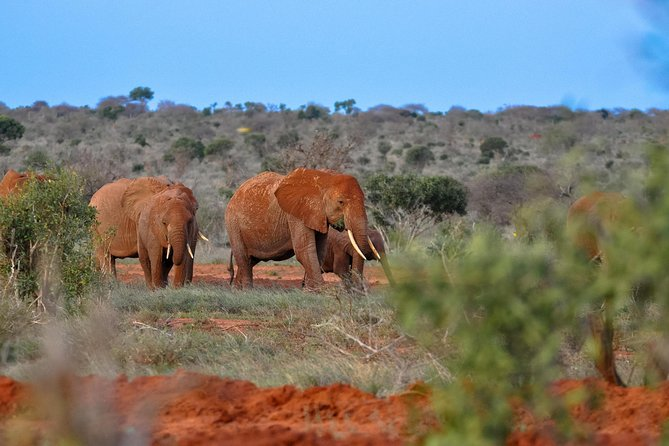 TSAVO EAST NATIONAL PARK <br><br>You will be picked up early in the morning from your hotel / place of stay, depart toTsavo Eastenter via the nearest gate, game drive en-route, be on the look-out for the plenty game on the way, arrive at the lodge/Hotel for lunch, thereafter continue with your game drives searching for the variety of wildlife, exit the park and drive back arriving late evening at your hotel or place of stay