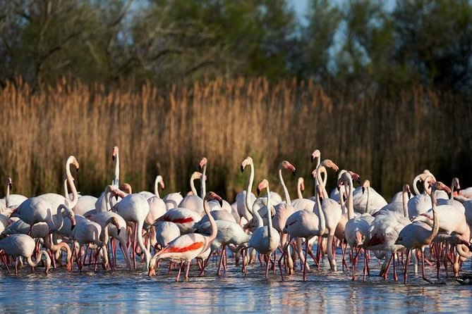 A picturesque way to discover the Camargue national park including the visit of the medieval town of Aigues Mortes, a safari through rice field, vineyard, olive fields and a stop to watch the white horses,<br>pink flamingos, black bull....
