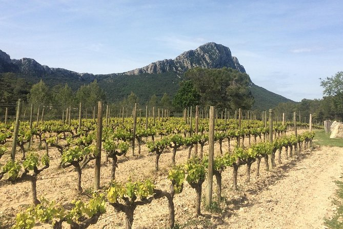 In this day wine tour, enjoy a picturesque getaway out of the city to explore the Montpellier countryside. <br>i will drive you to Pic St Loup wineries, discover all the wine process, enjoy their wines....then to a medieval little town to have a farm to table homemade lunch prepared by my mother.