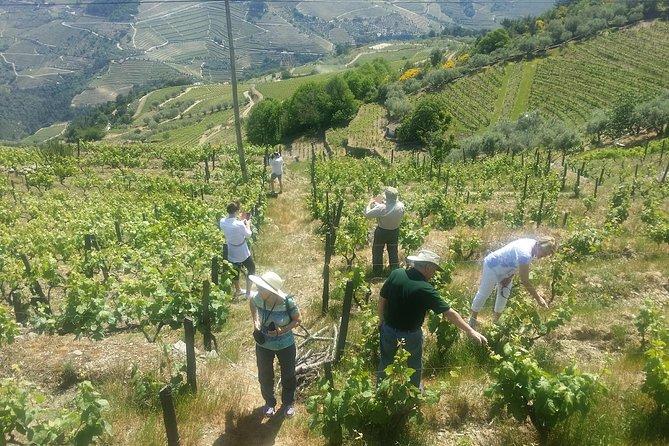 Excursión de un día completo para grupos pequeños al Valle del Duero y recorrido vinícola con almuerzo y cata, Oporto, PORTUGAL