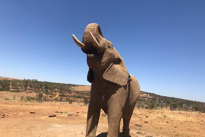 This overnight tented safari tour is jammed packed with game drives, wild animals, camp fires, traditional South African food and good old fashioned fun.<br><br>What to expect on this overnight safari?<br><br>It may at first seem like South Africa's largest botanical garden but we promise you that there are animals lurking around nearly every bush.The tour includes over 12 hours of game drives where you will get the opportunity to view the wild animals in their natural environment.<br><br>How we roll? We make use of proper canvass tents that just ooze 'safariness' and include comfortable camping stretchers with a mattress. And just to make sure you don't lose touch of those creature comforts, we even have a bedside light, duvets and fluffy white pillows. The rest of the camp comprises of a cooking/mess/communal tent. The traditional dinners are served under the stars next to roaring camp fire.<br><br>