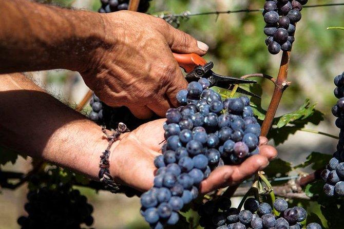 Valtellina: Winery tour and Tasting Experience, Livigno y Bormio, Itália