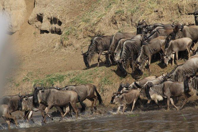 6 Days 5 Nights Luxury Safari, Arusha, TANZANIA