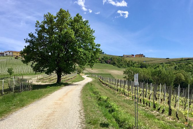 Easy trekking with a private tour guide set on the hills where the Barbaresco wine is produced, a few miles outside Alba. <br><br>Along the itinerary enjoy a Barbaresco winery tour and a tasting of four premium wines with food bites (salami, cheese and breadsticks).<br><br>The itinerary follows both off-road trails through the vineyards and paved countryside roads with stunning views over the Langhe hills, a UNESCO World Heritage site.<br><br>The tour guide delivers a full presentation of this wine region, such as information on the natural conformation of the hills, the microclimate and the cultivation of Nebbiolo grapes which will age to become Barbaresco wine.<br><br>The itinerary is about 10 km (6.5 miles) and it goes from the level of the Tanaro river up to a panoramic hill crests with an elevation gain of about 250m (850 ft).