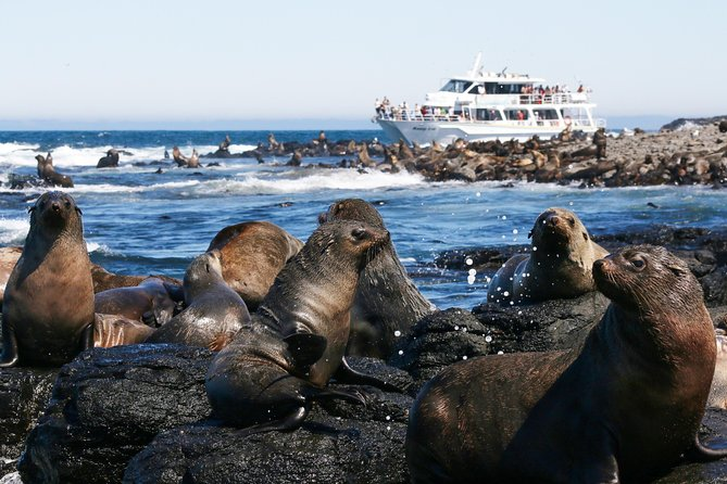 See thousands of Australian fur seals in their natural habitat during a 2-hour wildlife cruise from Phillip Island. Journey on a comfortable catamaran with indoor and outdoor viewing decks to Seal Rocks, home to the largest colony of fur seals in Australia. En route, look for dolphins, whales, penguins and seabirds while your onboard guide provides informative commentary about the wildlife and history of Phillip Island and the Mornington Peninsula. Includes complimentary afternoon tea with light snacks and coffee or tea.