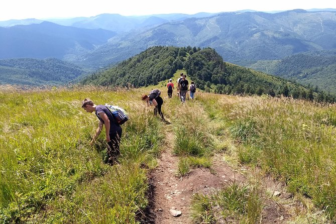 Hiking in Carpathian Mountains - Guided Walking Nature Tour., Leopolis, Ukraine