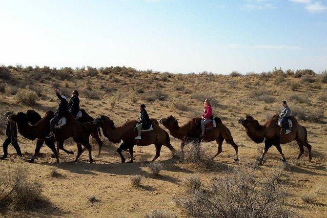 MÁS FOTOS, Exotic Tour and Camel Riding