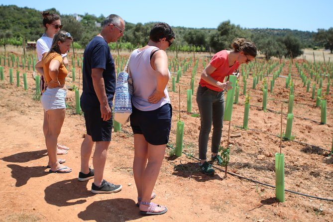 Lagos: Algarve Wine Tour in a VW T2 Van, Lagos, PORTUGAL
