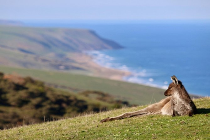 The ultimate full-day tour of the Fleurieu Peninsula. Explore the region's breathtaking landscapes, discover indigenous culture, spot native wildlife, and visit the historic Victor Harbor, while savoring local gourmet produce and boutique wines.