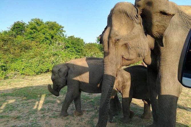 Udawalawe Safari Tour From Ella(All inclusive), Parque Nacional Yala, SRI LANKA