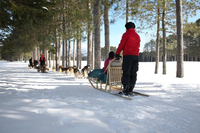Dogsled Adventure in Mont-Tremblant, Mont-Tremblant, CANADA