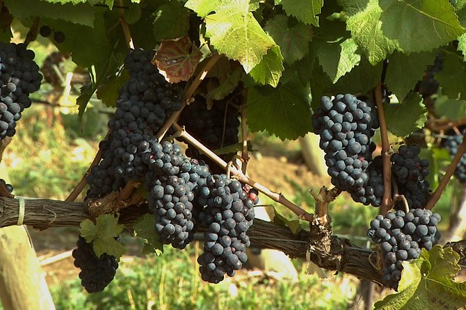 East Kelowna Wine Tour - 4Hrs - PRIVATE, Kelowna y Okanagan Valley, CANADA