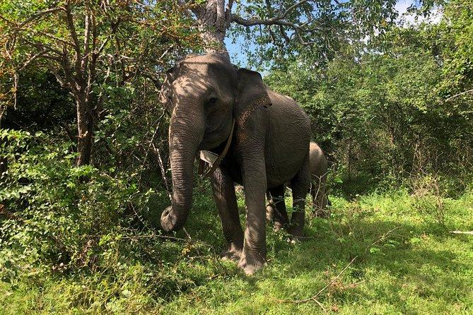 Yala Wild Safari Tours, Parque Nacional Yala, SRI LANKA