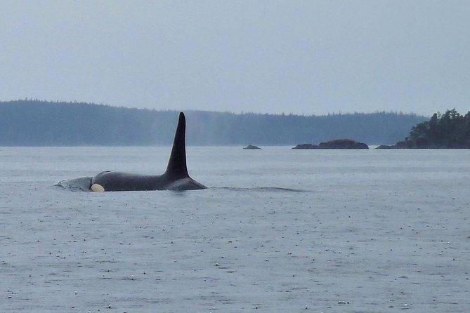Queer Kayak Adventure - Broken Group Islands 4 Days - July 24-27, Isla de Vancouver, CANADA