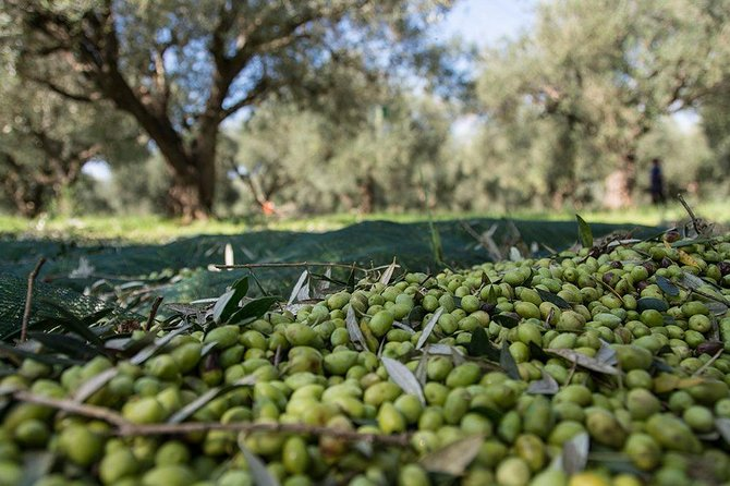 MÁS FOTOS, Olive oil tasting & light lunch in Messinia, Greece!
