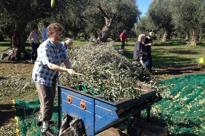 Olives And Virgin Olive Oil Day In Kalamata With Lunch In Our Farm, Kalamata, GRECIA