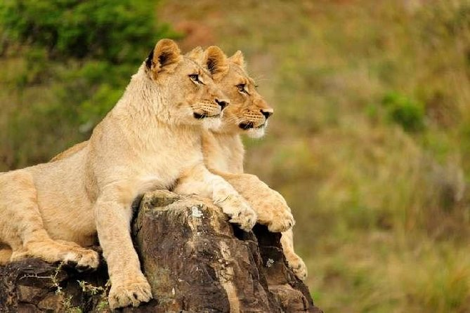 Discover the beauty of the Eastern Cape in this half-day shore excursion to Inkwenkwezi Private game reserve. <br><br>You will be welcomed by traditional Xhosa singing and dancing before you are taken on a 3 hour game drive to see the African wildlife<br><br>After the game drive enjoy a buffet lunch in true African style<br>