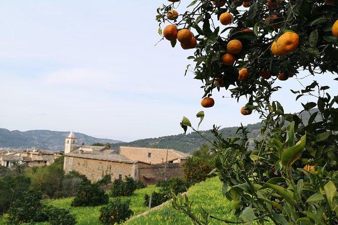 Olive Oil Culture + Tasting, La Palma, ESPAÑA