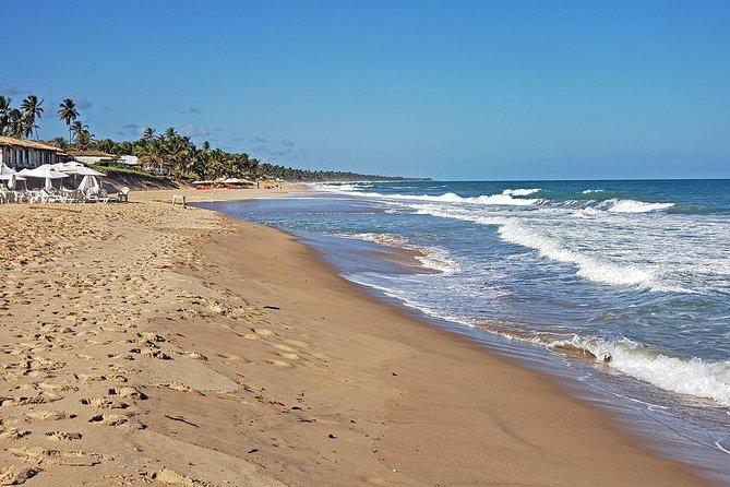 Ivan Bahia, private full day beach-tour, swim with turtles, visit Praia Forte, Salvador de Bahia, BRASIL