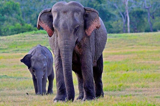 MÁS FOTOS, Udawalawe National Park | 3 hour Safari Tour | Elephants Transit Home
