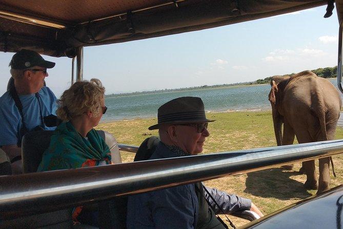 Udawalawe National Park | 3 hour Safari Tour | Elephants Transit Home, Parque Nacional Yala, SRI LANKA