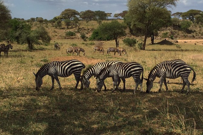 This safari/ itinerary is a perfect safari for couples in Honeymoon or families in vacations and they would like to have a different taste to have a wildlife safari with a tight Budget and maximum satisfaction.