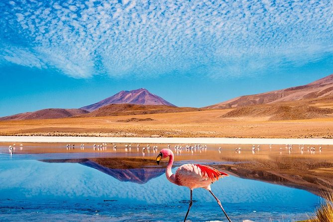 nique semi-private tour in which you will have the possibility to know the most famous attractions of<br>the region, visualizing the flora and fauna present in the most arid desert and its outstanding<br>gastronomy