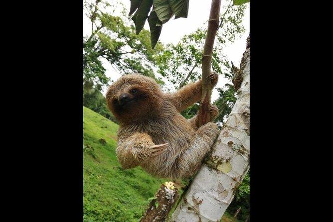 Sloth's Territory - Hiking Tour & Miravalles volcano, Liberia, COSTA RICA