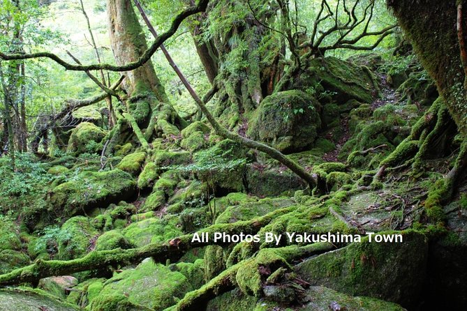 Yakushima is great spiritual island and everyone must experience Yakushima nature tour. Especially island trekking is must try and our guide will introduce Trekking route more deeply and walk together in Yakushima. Moreover This product is confirmed English speaking guide and no stress language and get feel safety during tour. If any question during tour, Guide will support all.
