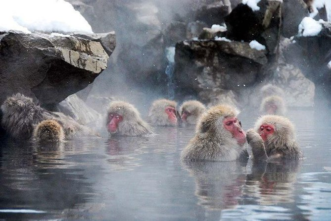 Fantastic memories with wonderful service.<br>We will meet you and take you to the famous Jigokudani Snow Monkey Park<br>Your guide is licenced and very professional<br><br>We can plan your arrival from Tokyo, Kyoto, Kanazawa, Nagoya and Nagano, as well as other cities, and we will meet you at Nagano station.<br><br>The time at the Monkey Park can be up to 2 hours, and your time with the guide is 4-6 hours.<br><br>We can send a guide or a car to meet you for an extra fee in a different city.