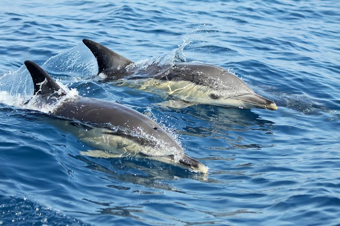 MÁS FOTOS, Small-Group Dolphin Watching in Lisbon