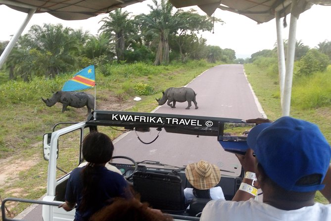 Kwafrika Travel 3 days Congo River and N'sele Park package brings you to Kinshasa city and its surrounding in the Democratic Republic of the Congo. It makes you experience Parc de la vallée de la N'Sele, a park located in the western part of Congo in the commune of Maluku. The park is being populated with more and more animals representing the biodiversity of the Congo. It contains: lions, impalas, zebras, giraffes, buffaloes, hippos, rhinos, elephants. After experiencing lions, you will go for an majestic and relaxing boat cruise on the Congo River.