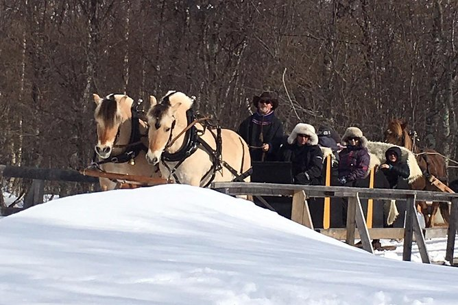 """A perfect family exursion! <br>Experience the nature and silence surrounded by snow-clad mountains in the valley of Mathisdalen and come join our family at Omdal farm. <br>The sleigh is drawn by the horse breed known from the Disney movie """"Frozen"""". The sheep you will meet, have the opportunity to be outside all year long, and in the summertime they lives side by side to the reindeer up in the mountains. After the ride, you can warm up in our Sami tent, called a lavvo, where we serve coffee/tea/pastry/cured meats."""