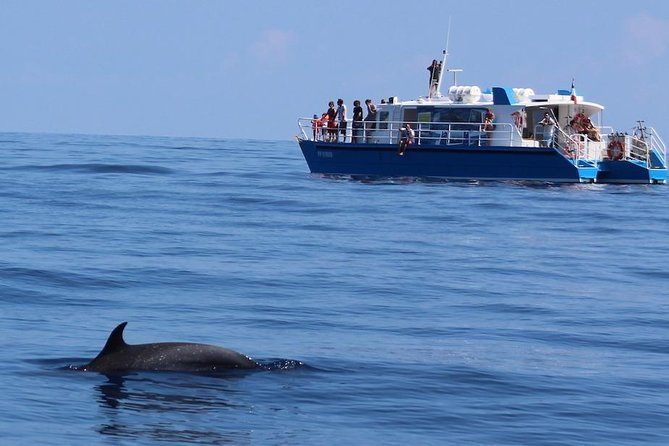 Meet whales, dolphins and sperm whales from Bouillante, departure next to Malendure beach, for the best observations while respecting the natural environment.<br>Each trip is a unique adventure, you will participate in the localization of animals and will experience data collection alongside scientists and naturalists who work to preserve cetaceans.<br>25 years of experience in knowledge of cetaceans and the marine environment<br>Scientific supervision accessible to all<br>On-board hydrophones to detect sounds made by cetaceans<br>Captain trained in respectful approaches<br>Safe and perfectly maintained vessel, POLMAR V approved<br>Catamaran with covered part sheltering from the sun<br><br>A la rencontre des baleines, dauphins et cachalots<br>Chaque voyage est une aventure unique, vous participerez à la localisation des animaux et expérimenterez la collecte de données aux côtés des scientifiques qui œuvrent à la préservation des cétacés.<br>Encadrement scientifique à la portée de tous<br>Hydrophones embarqués<br><br>