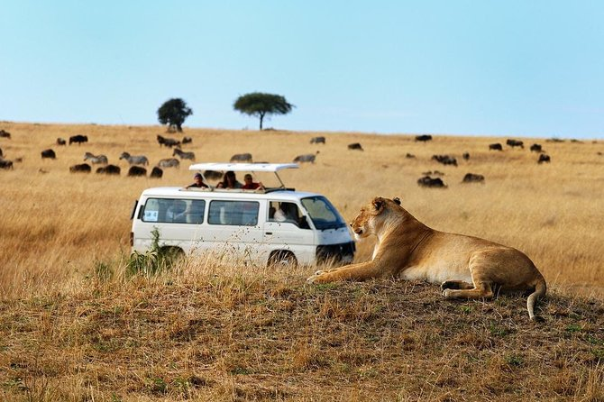 Without leaving Nairobi, you will see plenty of wildlife in just few hours on this tour to Nairobi National Park. Our customized tour vans with a pop up roof will takes you through the park in search of animals like black rhinos, lions, leopards, cheetahs, hyenas, buffaloes, giraffes, zebras, and wildebeest, as well as countless species of wild birds in a wild habitat, and an in-the-know guide shares information and ups your chances of seeing the animals you most want to see. Enjoy Free pick ups and drop off from the Airport.<br><br>Other attractions include the ivory burning site monument. Don't miss this chance to get up close with some of Kenya's amazing wildlife! NOTE: (OPTION)We are pleased to take you to David Sheldrick Elephant Orphanage from 11AM-12Noon or Giraffe center at an extra US$20 per person