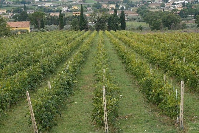 Assisi: Organic Winery Visit with Wine/Oil tasting and Full Lunch, Assisi, ITALIA
