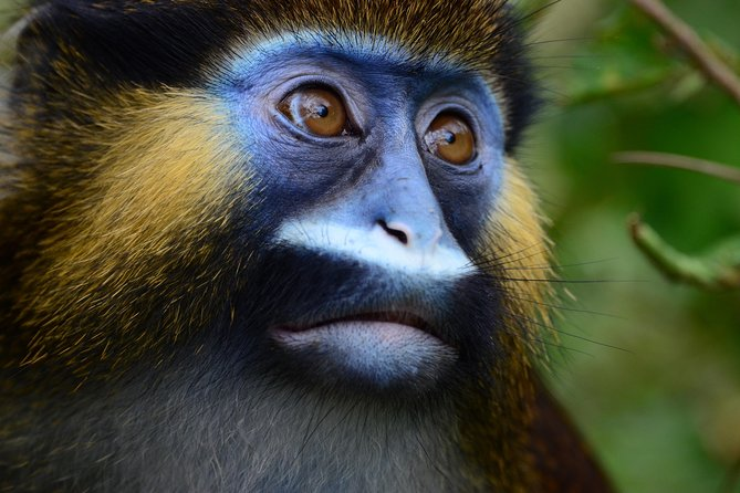 This tour will give the opportunity to exploring Lekedi and Leconi National Parks in Gabon and amazing National Parks in Congo. You will see Mandrills and Gorilla.