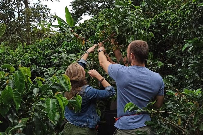 Express Coffee Tour & fruit tasting, Medellin, COLOMBIA