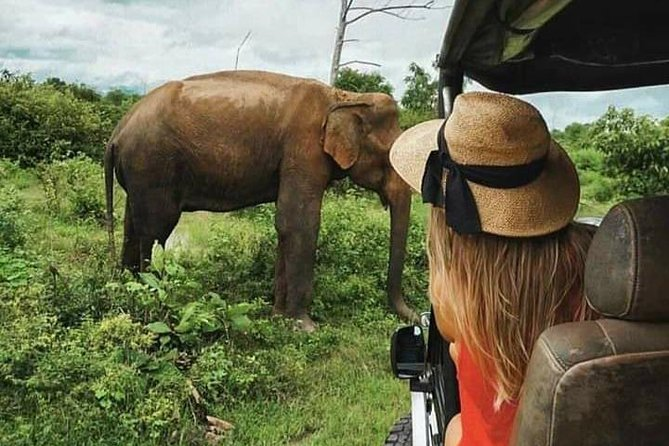 Udawalawe National Park Safari With Traveling Mirissa / waligama To Ella, Galle, SRI LANKA