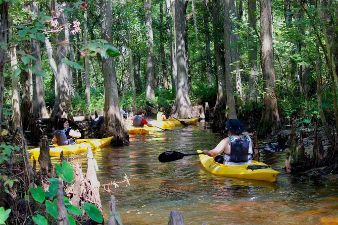 MÁS FOTOS, 2-Hour Cypress Forest Guided Kayak Tour