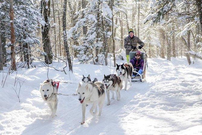 Mont Lac-Beauport Trineo con perros o Pesca en el hielo o Moto nieve, tu eliges!, Quebec, CANADA